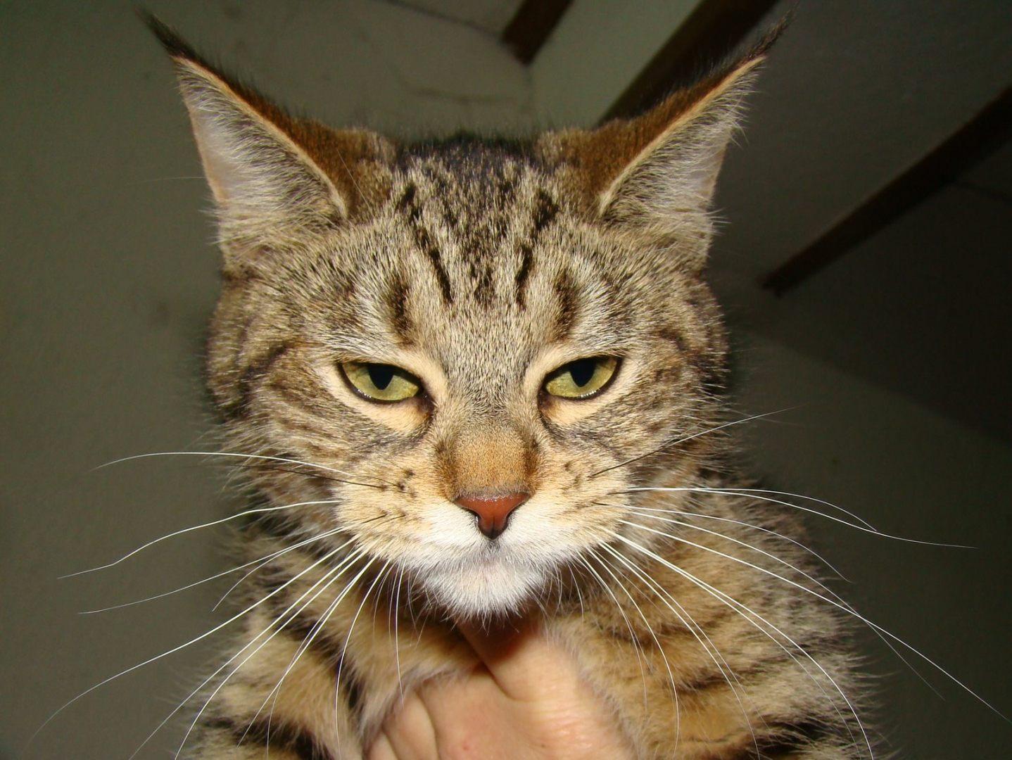 организация отдыха коты с кисточками на ушах фото осетия